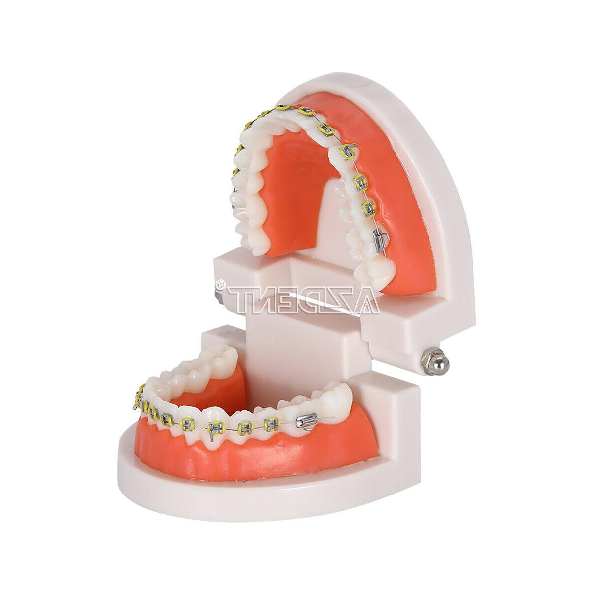 Dental with Metal Bracket for Dentists Use