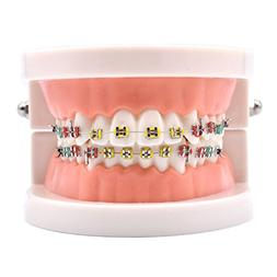 oral dentistry dental orthodontic model